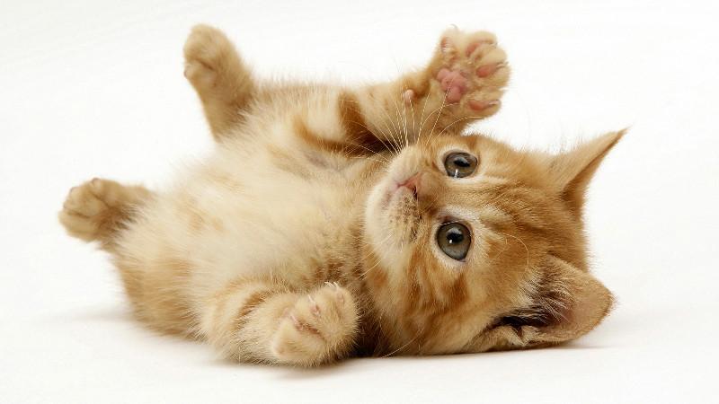 playful-kitten-6683